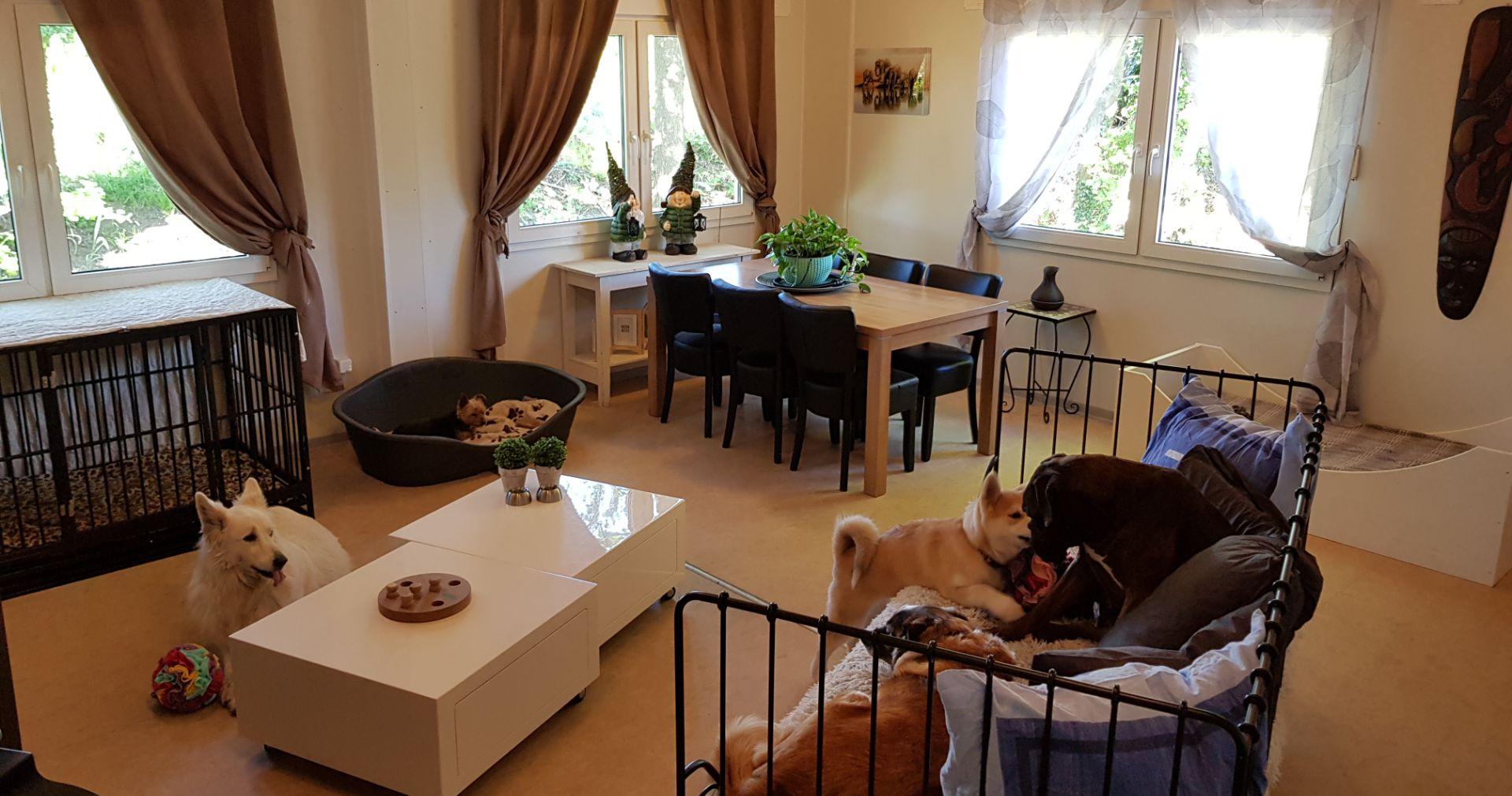 dierenpension huiselijk
