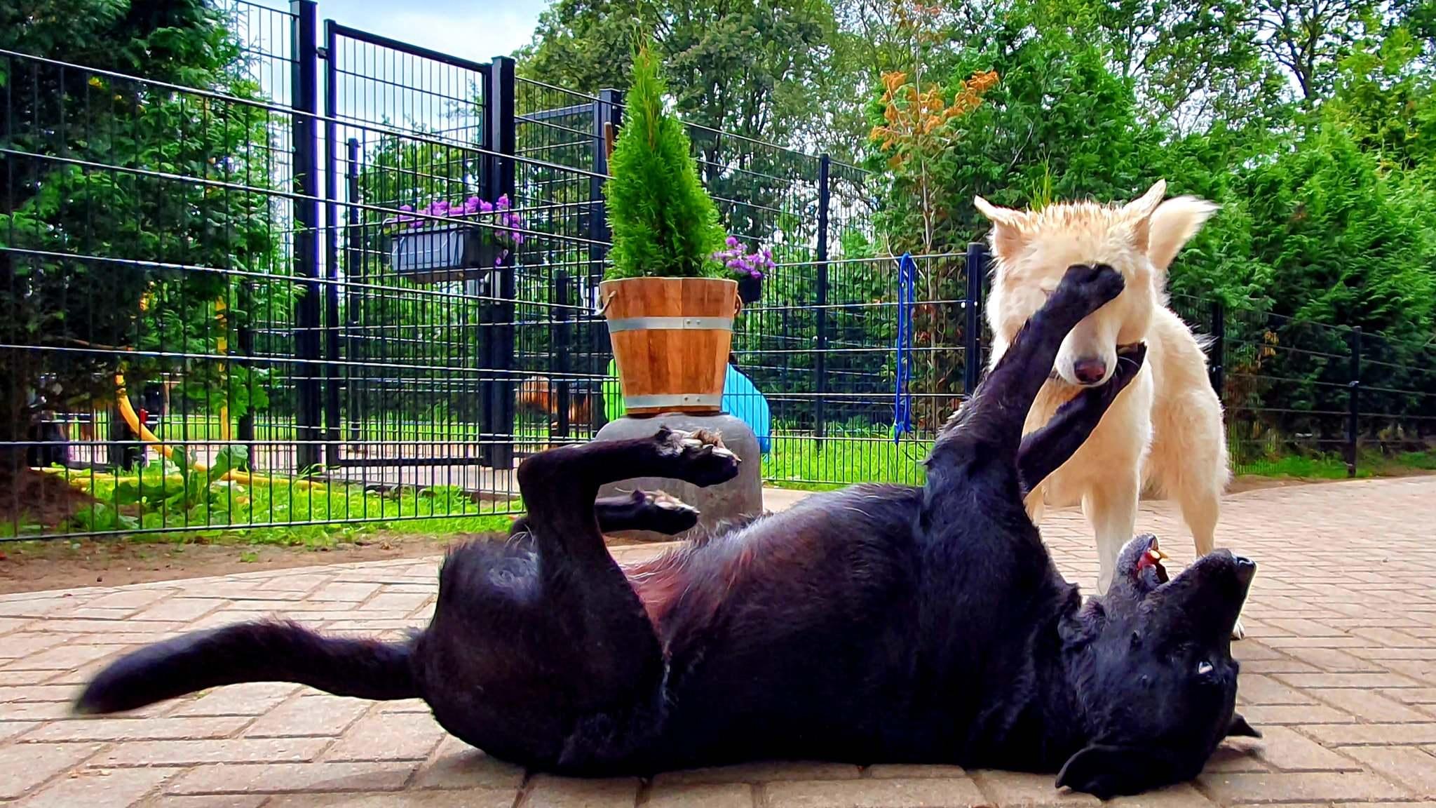 dierenpension activiteiten