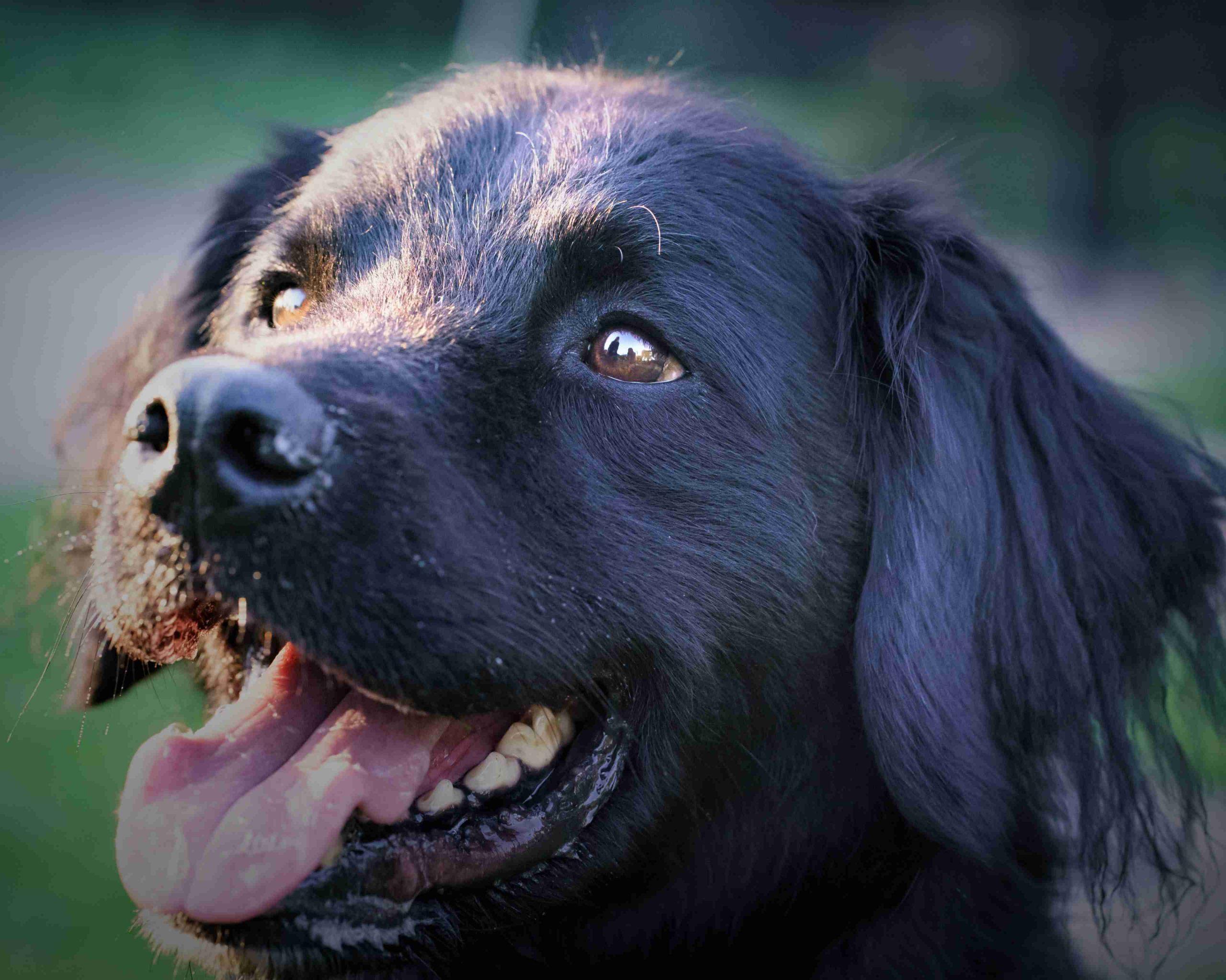 honden portretfoto's