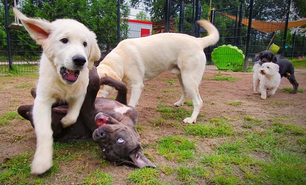 puppyspeeldagen