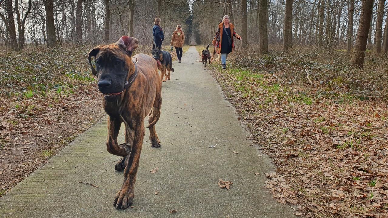 wandelen in de roedel review